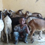 Goats and children taking shelter from the rain
